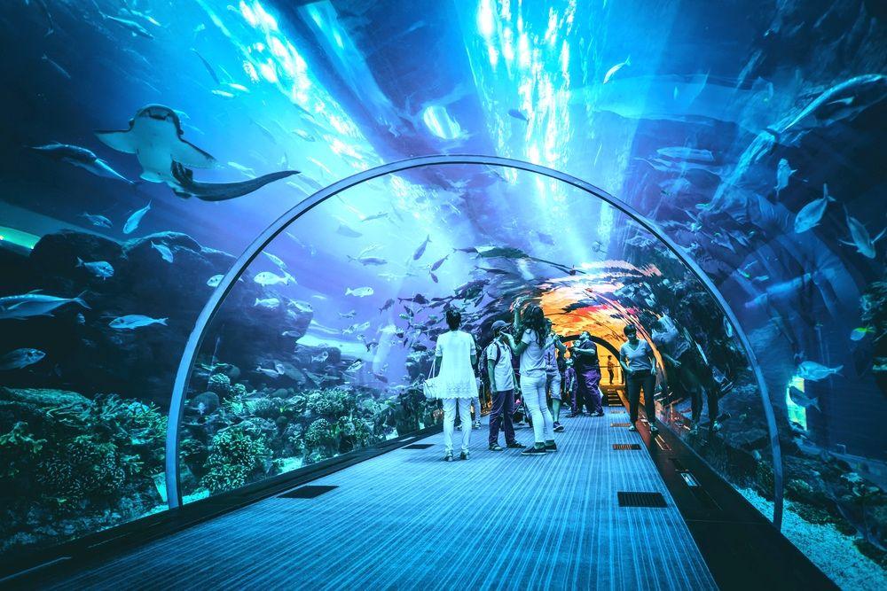 Activité Dubai Aquarium