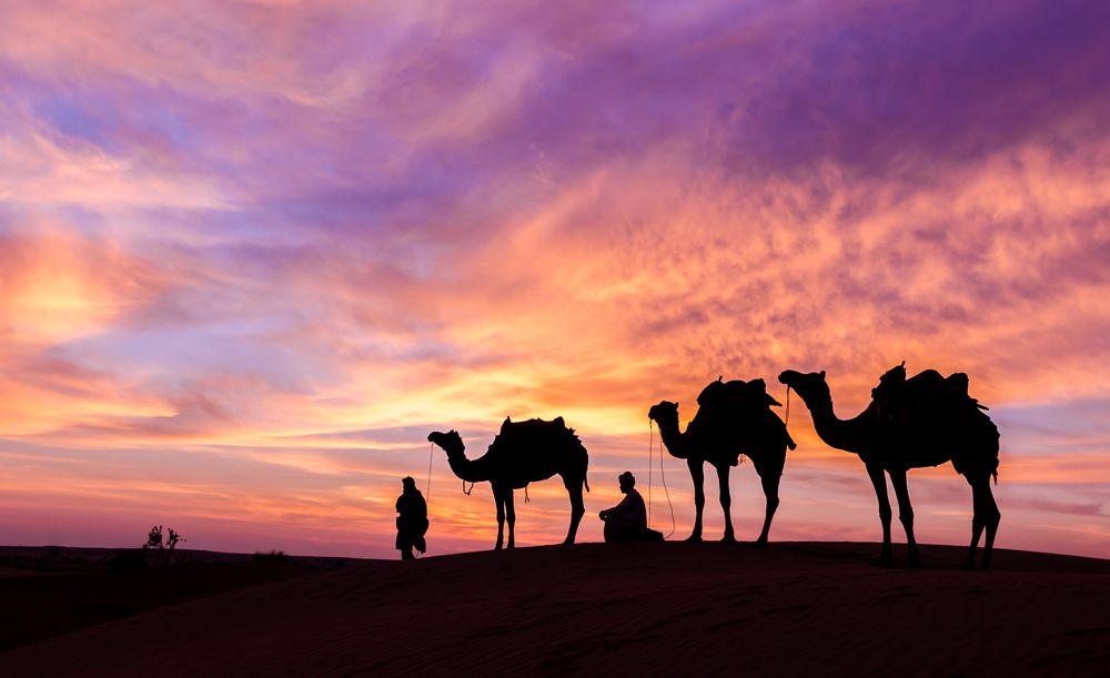 Dromadaire dans le désert à Dubai