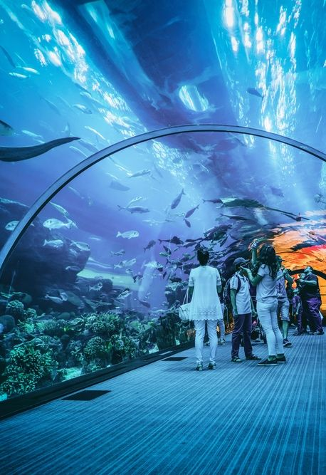 Top 10 à Dubai : Dubai Aquarium