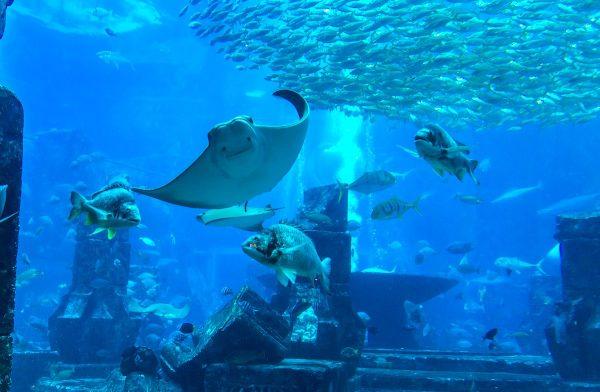 Dubai Aquarium et Underwater Zoo